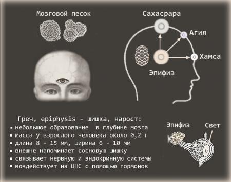 Эпифиз. Тайна мозгового песка.